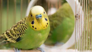 初心者がペットとして飼いやすい鳥の種類とは?